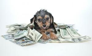 Lån penge til ny hund